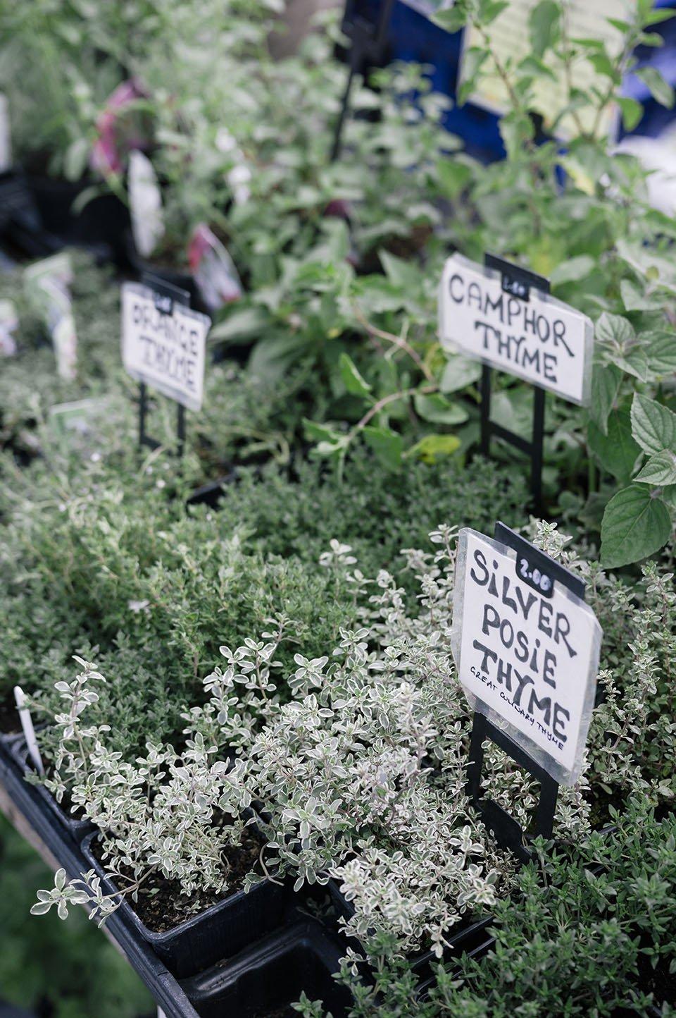 urban village fete plants growing herbs